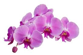 orchid gardening 2