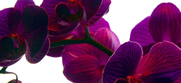 orchid gardening 4